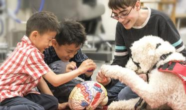 Three young boys and a guide labrador dog playing and looking at a model of a brain