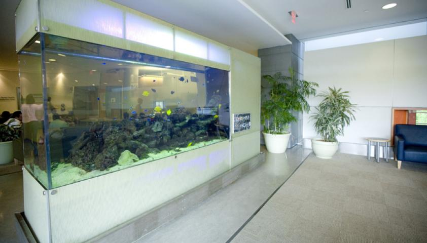 Dental reception is located past the 'Fish Tank' as you exit the elevators